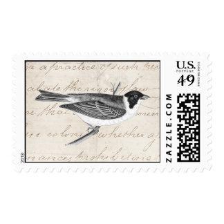 Vintage Song Bird Illustration -1800's Birds Stamp