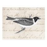 Vintage Song Bird Illustration -1800's Birds Postcards