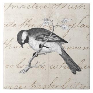 Vintage Song Bird Illustration -1800's Birds Text Ceramic Tile
