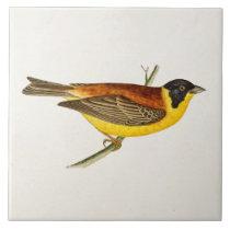 Vintage Song Bird Illustration -1800's Birds Tile