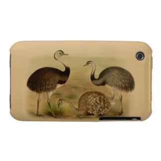 Vintage South American Rhea Birds iPhone 3 Case