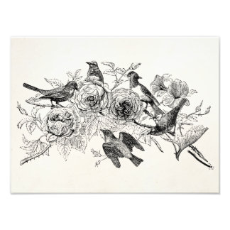 Vintage Sparrow Birds Personalized SparrowsBird Photo Print