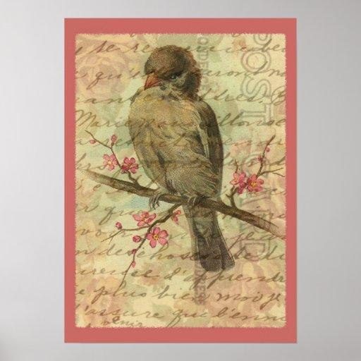 Vintage Sparrow Poster