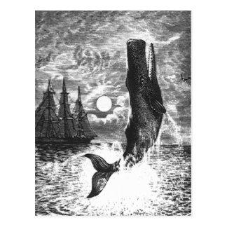 Vintage Sperm Whale Breaching, Marine Life Animals Postcard