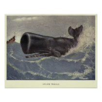 Vintage Sperm Whale Painting (1909) Poster