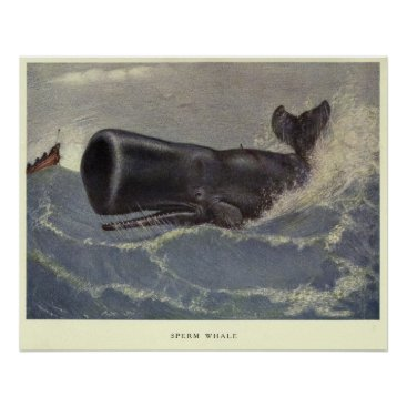 Art Themed Vintage Sperm Whale Painting (1909) Poster