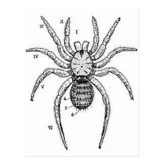Vintage Spider Diagram Postcard