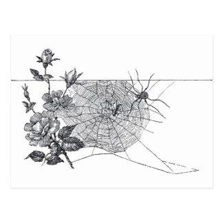 Vintage Spider Web and Rose Postcard
