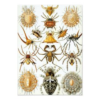 Vintage Spiders, Arachnida by Ernst Haeckel 5x7 Paper Invitation Card