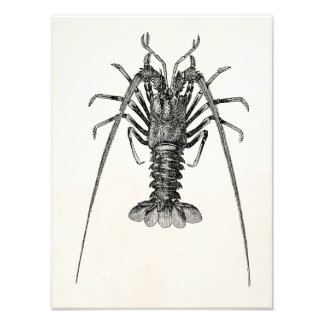 Vintage Spiny Lobster Personalized Template Photo Print