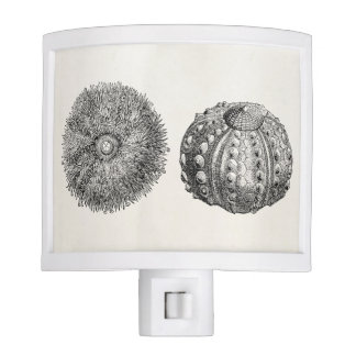 Vintage Spiny Sea Urchin Antique Template Night Light