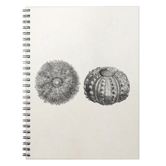 Vintage Spiny Sea Urchin Antique Template Spiral Notebook
