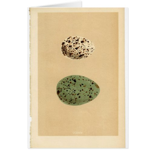 Vintage Spotted Egg Cards