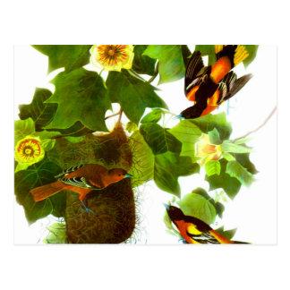Vintage Spring Day Birds & Flowers Postcard