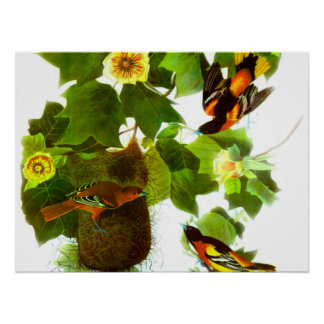 Vintage Spring Day Birds & Flowers Poster