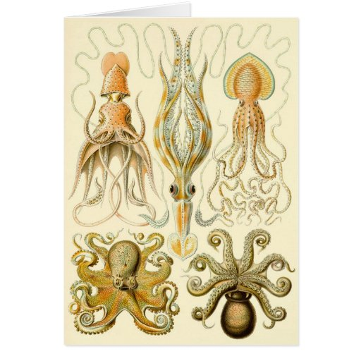 Vintage Squid Octopus Gamochonia by Ernst Haeckel Greeting Card