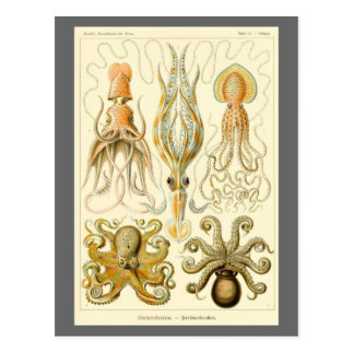 Vintage Squid Octopus Gamochonia by Ernst Haeckel Postcard