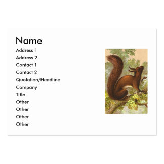 Vintage Squirrel Large Business Cards (Pack Of 100)