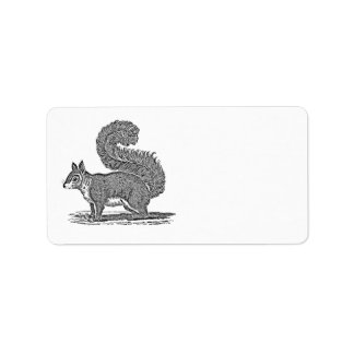 Vintage Squirrel Illustration -1800's Squirrels Address Label