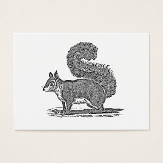 Vintage Squirrel Illustration - 1800's Squirrels Business Card