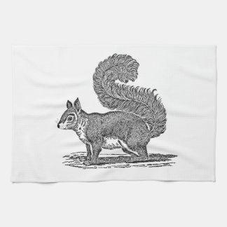 Vintage Squirrel Illustration -1800's Squirrels Kitchen Towel