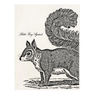 Vintage Squirrel Illustration - 1800's Squirrels Postcard