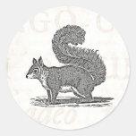 Vintage Squirrel Illustration -1800's Squirrels Sticker