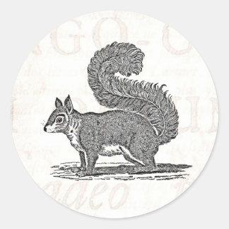 Vintage Squirrel Illustration -1800's Squirrels Classic Round Sticker