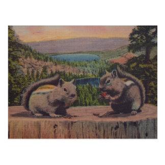 Vintage Squirrel Mountain Scene Postcard