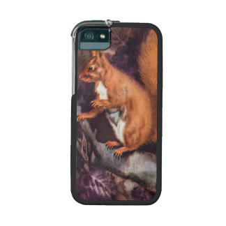 Vintage Squirrel On A Tree Cover For iPhone 5/5S
