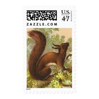Vintage Squirrel Postage
