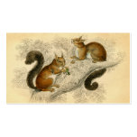 Vintage Squirrel Print Double-Sided Standard Business Cards (Pack Of 100)