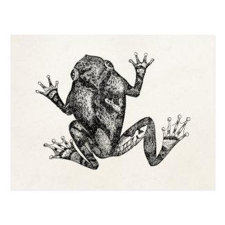 Vintage Squirrel Tree Toad - Reptile Frog Template Postcard