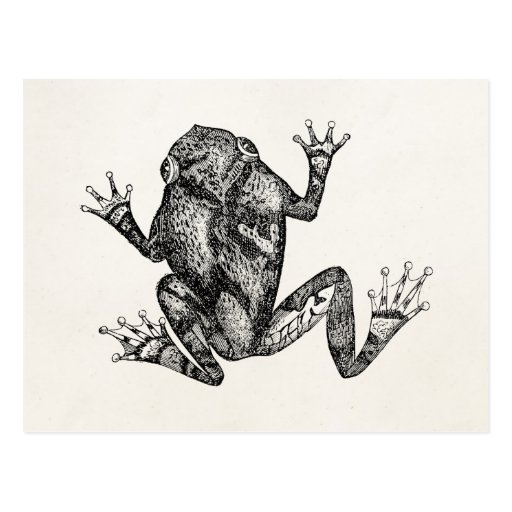 Vintage Squirrel Tree Toad - Reptile Frog Template Post Card
