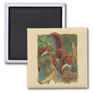 Vintage Squirrels, Forest Creatures, Wild Animals Magnet
