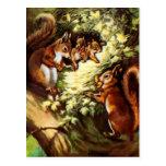 Vintage Squirrels Postcard