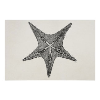 Vintage Starfish Antique Star Fish Template Poster