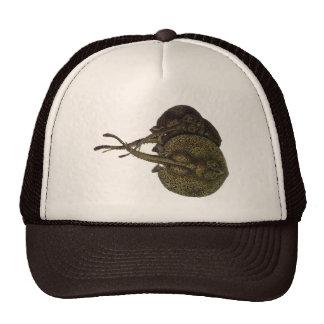 Vintage Sting Rays Stingrays, Marine Life Animals Trucker Hat