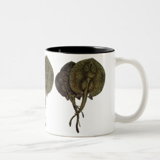 Vintage Sting Rays Stingrays, Marine Life Animals Two-Tone Coffee Mug