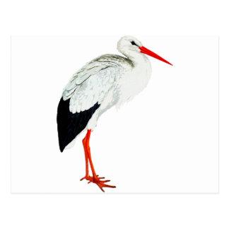 Vintage Stork Illustration Postcard