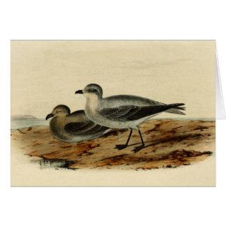 Vintage Storm Petrel Bird Greeting Cards
