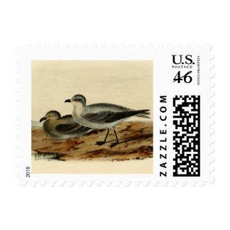 Vintage Storm Petrel Bird Stamp