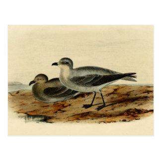 Vintage Storm Petrel Bird Postcards