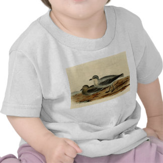 Vintage Storm Petrel Bird T-shirts