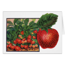 Vintage Strawberries, Strawberry Plants on a Farm