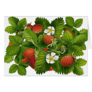 Vintage Strawberry Plant Card