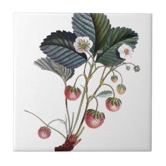 Vintage Strawberry Plant Illustration Tile