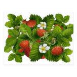 Vintage Strawberry Plant Postcard