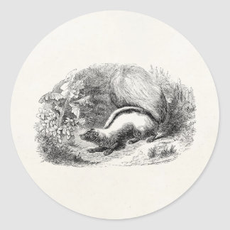 Vintage Striped Skunk 1800s Skunks Illustration Classic Round Sticker