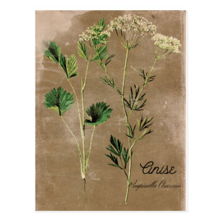 Vintage Style Anise Herb Postcard